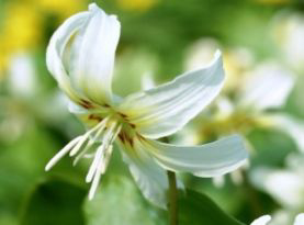 Hardy Plant Nursery - Hartside Nursery Garden - near Alston, Cumbria, UK
