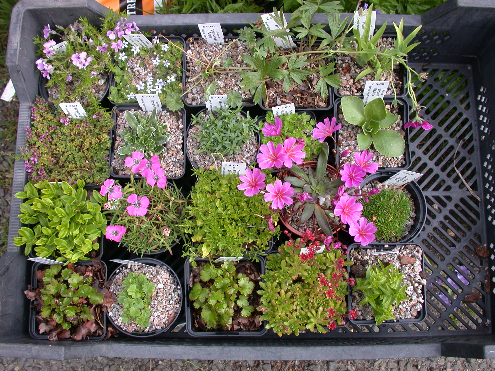 Collection of 20 Different Easy and Reliable Rock Garden ...